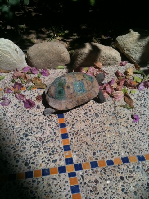 Not Master Oogway, but a v old tortoise I met in Morocco :)